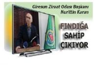 Nurittin Karan, fındığa sahip çıkıyor..