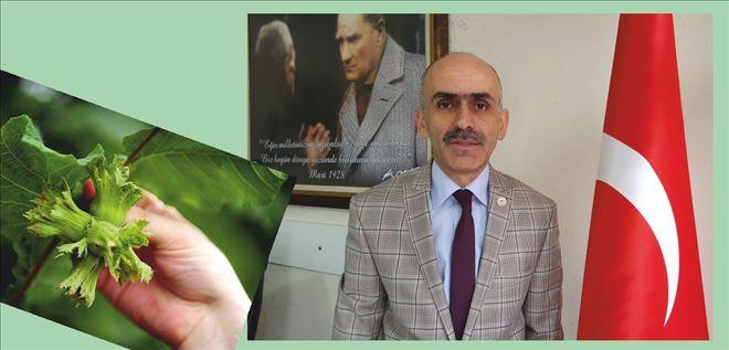 'Rekolteyi inandırıcı bulduk´  GZO Başkanı Karan, Bakan Çelik tarafından açıklanan 2016 tahmini fındık rekoltesiyle ilgili ne dedi?